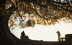 Tree frame (Lucas Pedruzzi) Tags: brazil color americalatina southamerica beautiful brasil america landscape br photos g great lucas latinoamerica cor sudamerica americadosul américadosul amériquedusud südamerika photobrazil latinoamérica americadelsur suldobrasil beautifulimage brazilianimage photoscanon pedruzzi americasouth lucaspedruzzi belafoto sulriograndense bellaimagen lucaspedruzziportoalegrepoacapitalgauchariograndedosulsulriograndensers fronteiragaucha fotoslucaspedruzzi pedruzzisphoto pedruzziphotografic fotosbylucaspedruzzi photolucaspedruzzi