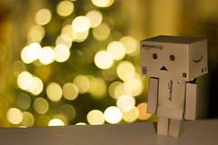 Danbo unhappy (E-Pandas213) Tags: christmas tree lights solitude sad lonely sorrow sorrowful danbo 2015 danboard 2k15