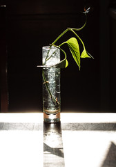 glass and light II (TheLittleMiss) Tags: light shadow contrast glass bright green plant leaves vase table