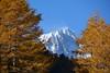 "Les ""piliers"" du Mont Blanc (giorgiorodano46) Tags: ottobre2016 october 2016 giorgiorodano montblanc montebianco valdaosta valléedaoste frêney piloni piliers bosco autunno larici arpy"