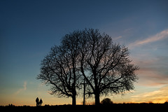 untitled . (helmet13) Tags: d800e raw studies people couple silhouette trees chestnut evening sunset sky silence peaceful buggy winter walk backlight