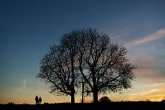 untitled . (helmet13) Tags: d800e raw studies people couple silhouette trees chestnut evening sunset sky silence peaceful buggy winter walk backlight aoi heartaward peaceaward