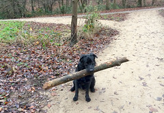 - Look, Mom, what a good stick I have found! (Caulker) Tags: