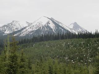British Columbia Wolf Hunt & Big Game 19
