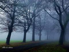 2017-01-08 allée du château(20)f (april-mo) Tags: fog brouillard mist misty foggy wood treesinfog winter bois secretwood alléeduchâteau trees arbres nature