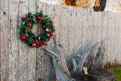 17  _DSC2393 (Betty Johnston) Tags: christmas sointula malcolm island bc british columbia west coast