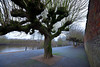 Pollarded trees (maddpete) Tags: pollardedtree tree pollard river worcester