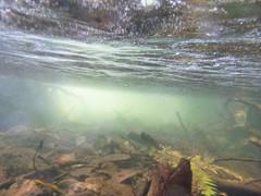 beneath the silver (Keith Midson) Tags: water underwater silverfalls waterfall falls tasmania
