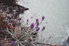 (Georgia Park) Tags: nature mountans flowers alberta explore hiking river
