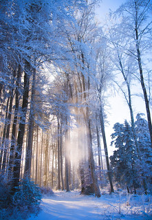 la forêt enchantée 😀 Fairytale forest