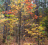 A Walk in the Woods 2016 18 Panorama (Jim Dollar) Tags: jimdollar fallwoods indianland southcarolina sc panorama canon6d