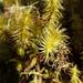 Unbekannte Pflanze - 2. Tag Aufstieg zum Barranco Camp (3.900 m) - Kilimanjaro