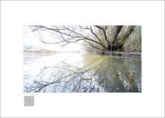 sweet winter (Emmanuel DEPARIS) Tags: fog emmanuel deparis nikon d4 hiver maraicage marais blanc arbre france haut de