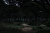 Down the Trail (Robert-Briggs) Tags: dark creepy path spain atmospheric moody scary trees forest night