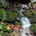 Slow Shutter Water Stream