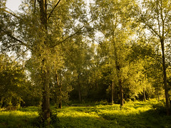 20150822-GR009715-Edit (fleetingphotons) Tags: trees river fishing ricohgr kennet wasingestate warrenbeat midghamberkshire