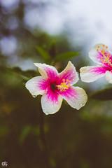 IMG_6242 (athingcalledlife) Tags: blackandwhite india green art nature rain photography colours lush coorg virajpet vsco