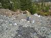 Mossburn Serpentine Quarry - Frank (Otago Rock and Mineral Club) Tags: dendrites serpentinemossburnsouthlandnewzealand