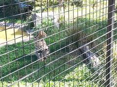 20150919_114549 (mjfmjfmjf) Tags: oregon zoo 2015 greatcatsworldpark