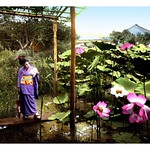 LITTLE LADY, LARGE LOTUS in OLD JAPAN thumbnail