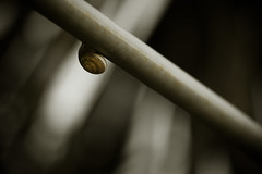 Snail (Hernan Piera) Tags: animal photography photo foto photographer slow image tube shell snail pic diagonal photograph rest fotografia spout concha tubo imagen caracol gastropod fotografo mollusk cao reposo carapace helixaspersa lento molusco gasteropodo slowness caparazon lentitud hernanpiera