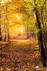 L'automne (photosenvrac) Tags: automne paysage foret couleur feuille sologne thierryduchamp