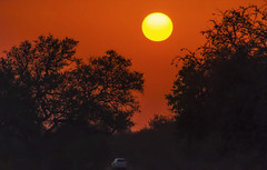 Sunrise at Kruger (Fil.ippo) Tags: panorama orange sun car sunrise landscape southafrica alba savannah filippo paesaggio krugernationalpark skukuza sigma70300 d7000 filippobianchi