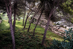Ruins amongst Trees, Neopolis (Lee Rudd Photography) Tags: park italy holiday italia it syracuse sicily archaeological sicilia siracusa neapolis saracusa neapolisarchaeologicalpark
