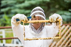Idaho Bees (Thomas Hawk) Tags: usa america insect unitedstates bees unitedstatesofamerica insects bee idaho honey honeybee ketchum beekeeping sunvalley honeybees techondeck techondeck2015 cynthiawoolleykearns