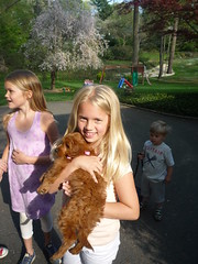 this-is-lola-with-her-new-sister-shes-one-of-lucy-and-chewys-little-girls-_4525299723_o