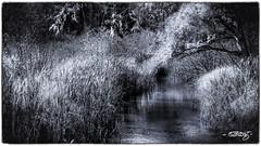 Mississippi Headwaters_mono (dougkuony) Tags: blackandwhite bw monochrome minnesota mono hdr itasca headwaters mississippiheadwaters