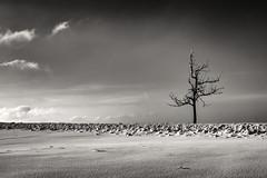 Einsame Höhen - Lonely Hights (pwendeler) Tags: winter baum tree snow schnee sky himmel landscape landschaft sonynex7 schwarzweis blackandwhite einfarbig rhön rhoenmountains hessen mountain schneelandschaft winterlandschaft