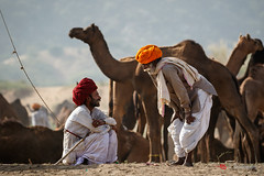 Untitled (Shameem Shah) Tags: man friendship travel india photography rajasthan camel dubaiphotographer pushkar turban shutterarts villager friend friends men