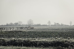 In the Fields - Beaune (Remy Carteret) Tags: canon 5d mkii mk2 markii france eos remycarteret rémycarteret beaune bourgogne burgundy canon5dmarkii canon5dmark2 canoneos5dmarkii canoneos5dmark2 5dmark2 5dmarkii mark2 canon5d color colors couleurs beaunechallanges brume brumes challanges arbre arbres tree trees mist haze 21200beaune 21200 champs fields champ field