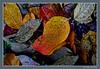 Last leaves of autumn (cienne45) Tags: creativitàautunnale autunno creatività creativo colori foglie foglieecolori vivace astratto autumncreativity autumn leaves color creative creativity leavesandcolors lively abstract bose carlonatale cienne45 natale autumn2016 cavagino santamariadelcampo rapallo