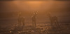 Sunset Deers - Auringonlaskun Kauriit (Mikko Sarén) Tags: roedeer roebuck metsäkauris sunset auringonlasku si silhuette siluetti beaty beatiful kaunis roedoe doe calf buck backlight vastavalo