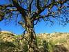 Simi Valley, .16/2 (Basic LA) Tags: crashcorrigan la losangeles socal simivalley santasusanapass corriganvillepark california santasusanaknolls