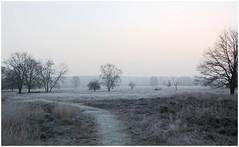 Herungerberg in Winter (Theo Bauhuis) Tags: winter limburg wit sunrise zonsopkomst landschap landscape heide hei