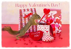 Happy Valentine's Day flickr world!! (Nancy Rose) Tags: 5052squirrel valentinesday gifts candy hearts love cute wildanimal props red