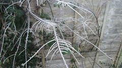 IMG_1037 (alexking13) Tags: plymouth cold ice freezing winterweather england morning photographer amatuer