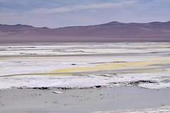 Atacama Desert (leeeelaine) Tags: reservanacionallosflamencos salardepujsa sanpedrodeatacama chile flamingo flamenco