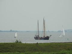 Sailing (Pedro Valadares) Tags: muiden muiderslot holanda nederland netherlands ijmeer barcos boats navegar sail sailing água water