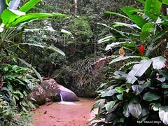 Tijuca Forest, Rio de Janeiro, Brazil (Black Diamond Images) Tags: riodejaneiro municipalityofriodejaneiro municípiodoriodejaneiro brazil brasil rio southamerica sudamérica américadosul zuidamerika amériquedusud tijucaforest tijucanationalpark