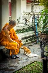 The Monk (Karthikeyaudupa) Tags: monk thailand bangkok cat humanity serene peace orange rain wet