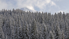 Paneveggio Forest (ab.130722jvkz) Tags: italy trentino alps easternalps lagorai snowfall mountains winter