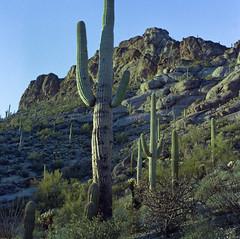 Cat Mnt Cacti 2 (Nicholas Lyle) Tags: zeiss messikonta carlzeiss 75mmf35 portra400 tessar kodak