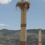 Archäologische Stätte Volubilis