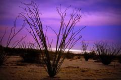 desert skies (woodwork's) Tags: sunrise mexico cerveza tequila baja sonorandesert ocotillo sanfelipe fishtacos eldoradoranch desertskies nobaddays marshalltuckerband