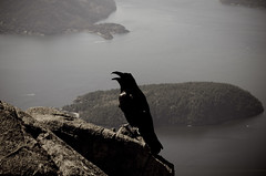 Raven (Silky Mitts) Tags: mountain vancouver nikon outdoor hiking hike cypress raven hikebc outdoorvancouver stmarkssummit explorebc
