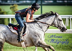 McGaughey Trainee (EASY GOER) Tags: horses horse ny newyork sports race canon track running racing 5d athletes races thoroughbred equine markiii